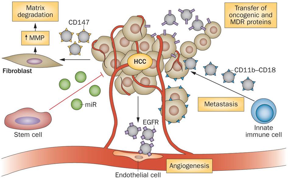 angiogenesis-dosd