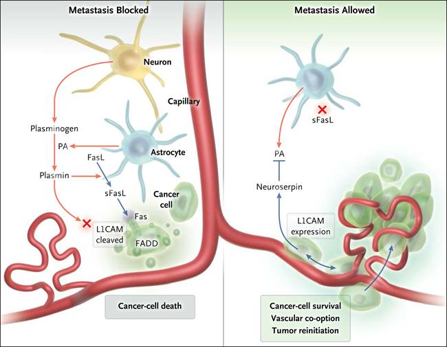 angiogenesis-en-tumor