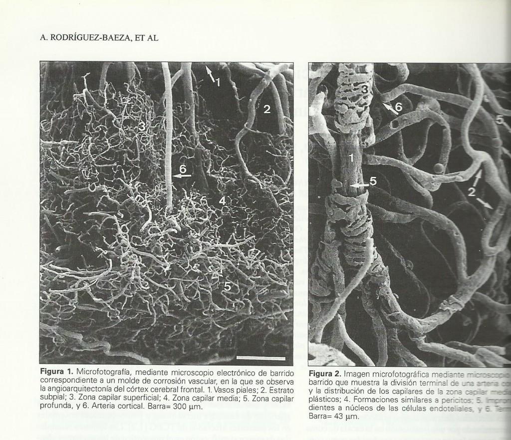 capilares-en-el-trsuma-r-baeza-001