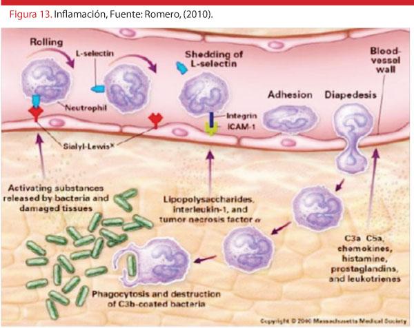 figura-15-inmuno