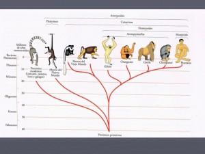 hominidos-110523203046-phpapp01-thumbnail-45