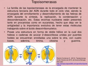 tema-42-enzimologa-de-la-replicacin-del-adn-estructura-y-funcin-de-topoisomerasas-helicasas-arn-y-dna-polimerasas-7-638